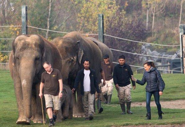 "Princess Stephanie of Monaco became the godmother of the baby elephant ""Ta Wan"" at Pairi Daiza, Belgium"