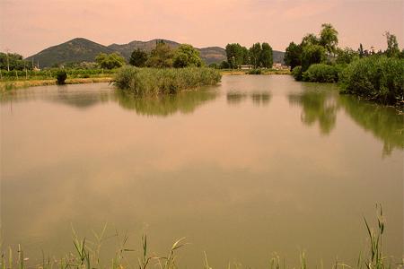 Che mondo bucaneve la sirena del lago di lispida for Lago padova