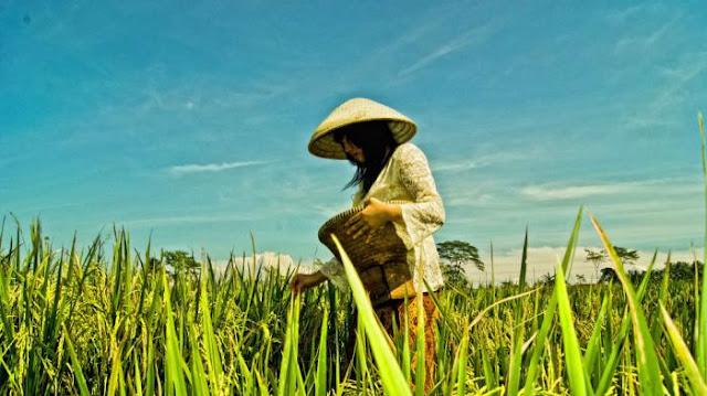 Ancaman krisis pangan didepan mata, petani tak lagi diminati