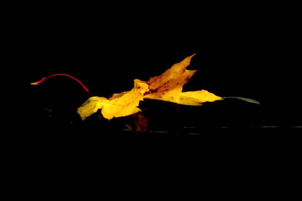 Nichita Stănescu  (Rumania, 1933-1983)  El libro de la hojarasca; Poemas escogidos     «Cuadriga»  «Afasia»  «Evocación»  «Paraguas»  «Náceme»  «Seña 10»  «Seña 19» (El ángel)  «Tentación de lo real»  «Hojarasca»  «Los jóvenes»  «Sexta elegía»; Col. «Cuadernos del Mediterráneo», nº 63 El Toro de Barro, nº 258; Carlos Morales Ed. Tarancón de Cuenca 2014 (En proyecto)