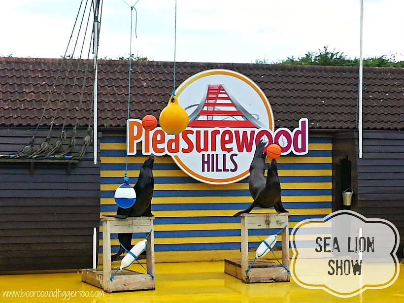 Sea Lion Show - Pleasurewood Hills, Lowestoft