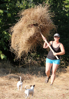 A hefting a large pile of hay