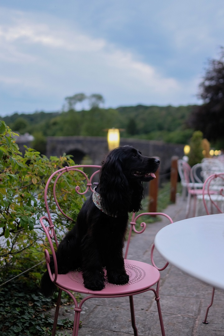 Dog Friendly Guide to The Lake District