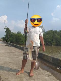 Ikan Sembilang Besar