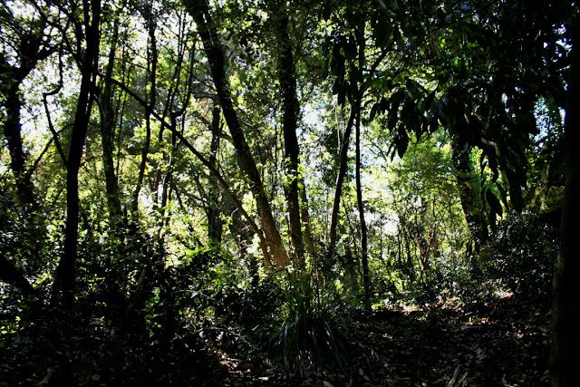 alberi, vegetazione