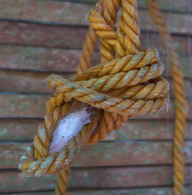 safe harbour, cocoon, rope