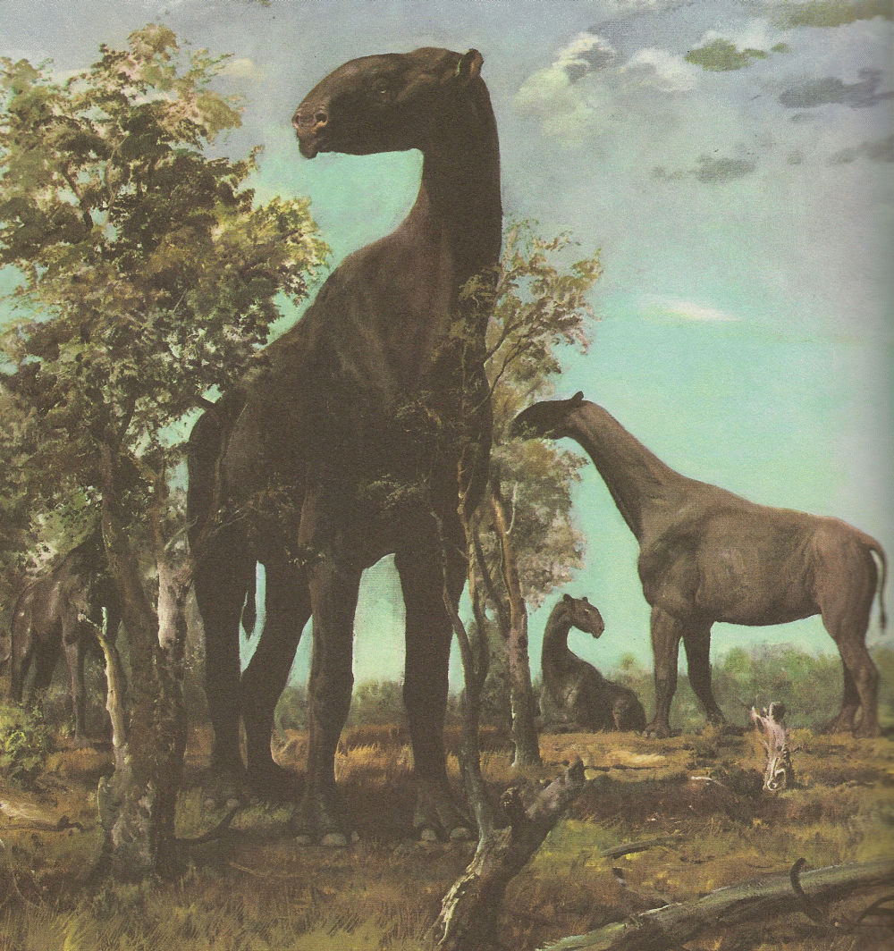 Seeds and Weeds: I IS FOR INDRICOTHERIUM