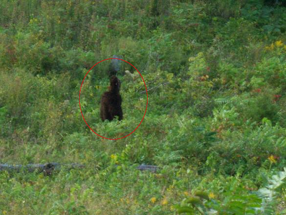 Another Possible Bigfoot Photo From Kentucky? | The Crypto Crew