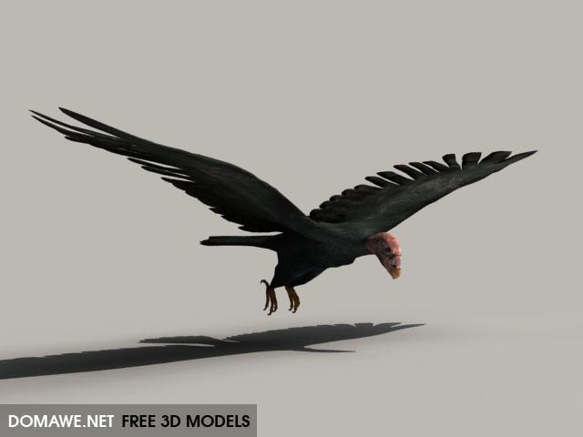 DOMAWE net: Condor - Free 3D Model Bird