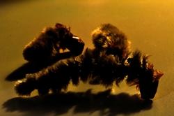 Krabbelnde Frühlingskatzenraupen...