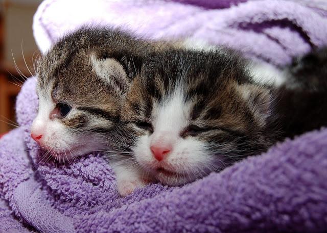 cat couple image