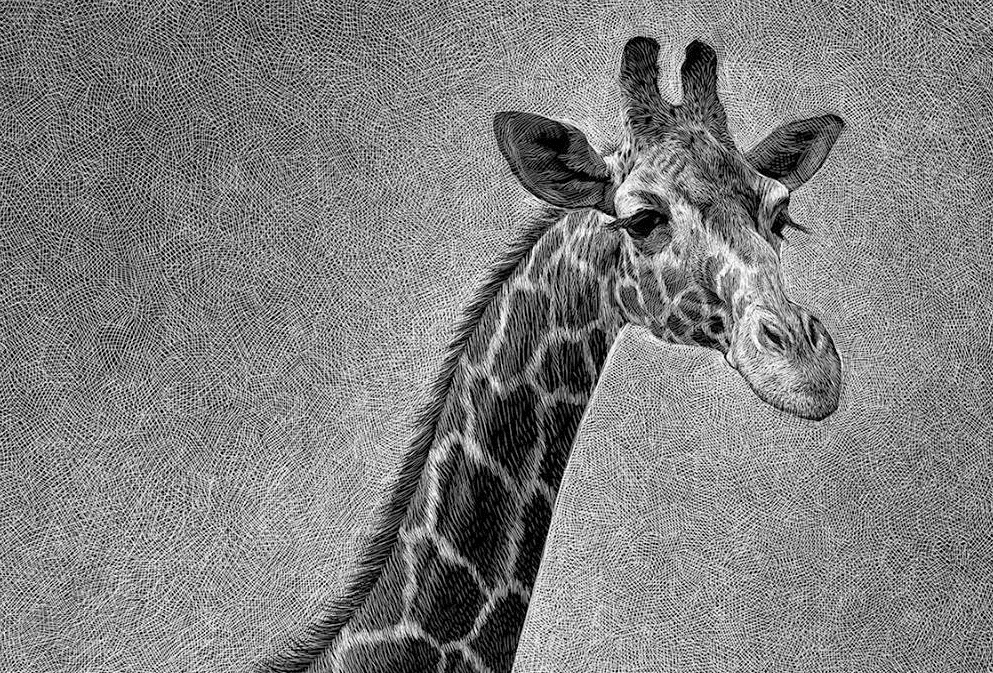 09-Giraffe-Detail-Ricardo-Martinez-Wild-Animals-inside-Scratchboard-Drawings-www-designstack-co