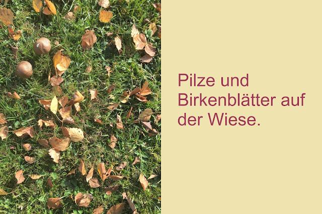 Pilze und Birkenblätter