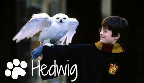 hedwig-harry-potter-snowy-owl