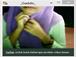 video bokep jilbab abg pamer buah dada,video jilbab remas susu