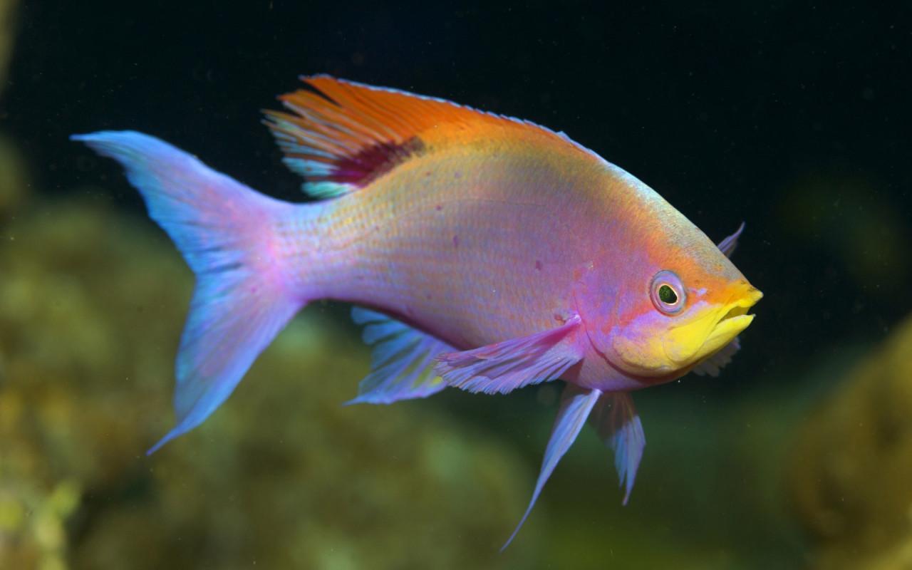 Fish underwater - photo#35