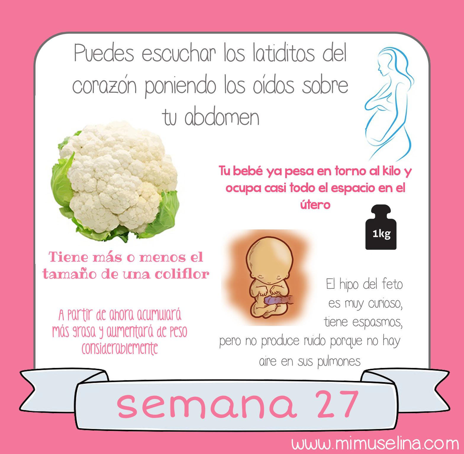 Bebeblog by mimuselina semana 27 embarazo tama o y evoluci n del beb mimuselina - 25 semanas de embarazo cuantos meses son ...