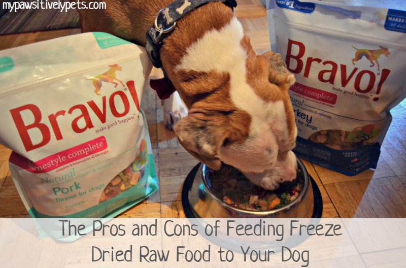 The pros and cons of a raw food diet for dogs