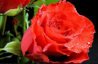 Kumpulan puisi cinta sejati dan puisi pengorbanan cinta