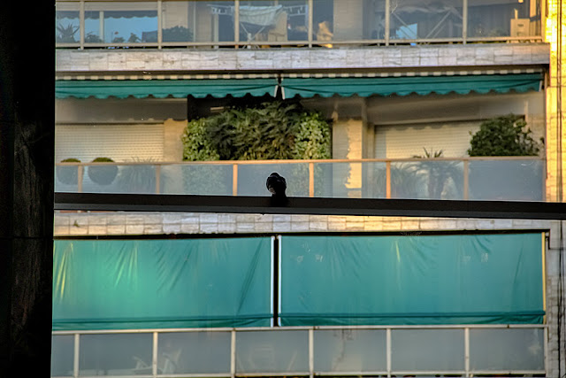 Desde una ventana un gorrión mirando hacia afuera.