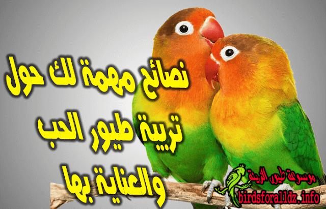 نصائح عن تربية طيور الحب  والعناية به