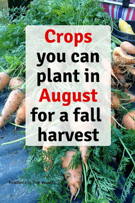Food crops to plant in August