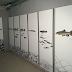 AMBIENTE - Peixes migradores mostraram-se em Coimbra