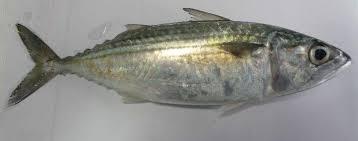 Resepi Ikan Salmon Untuk Bayi 1 Tahun ~ Resep Masakan Khas