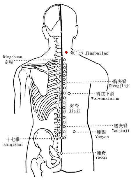 頸百勞穴位   頸百勞穴痛位置 - 穴道按摩經絡圖解   Source:zhongyibaike.com