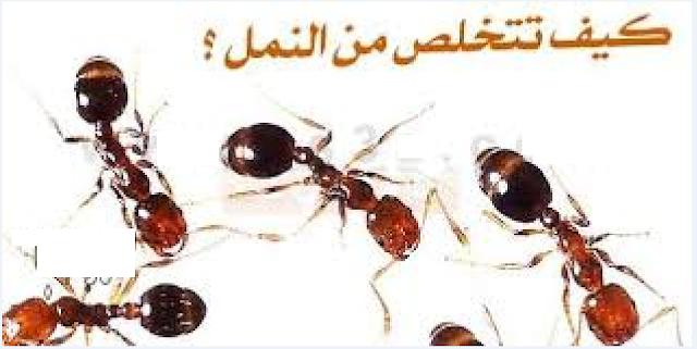 أفضل طريقة لطرد النمل دون ايذاءه سبحان الله!!
