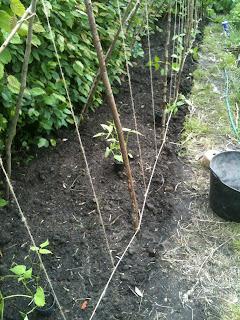 gardening, growing vegetables, life on pig row