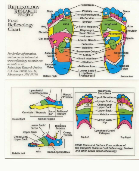 This chart shows you what young living essential oils to uses also adrianne tx reflexology charts rh adriannetxspot