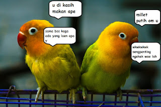 Mengenali Karakter Burung Lovebird Agar Lebih Mudah Mensettingnya