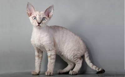 Tüyü Dökülmeyen Kediler