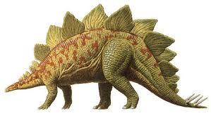 مالفرق بين ذكور الديناصورات وإناثها من حيث الشكل؟