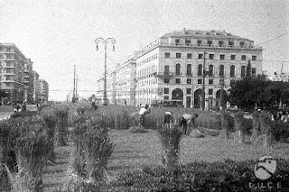Le origini storiche degli orti urbani