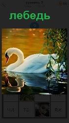 по воде плывет изящный лебедь изогнув шею и отражаясь в воде