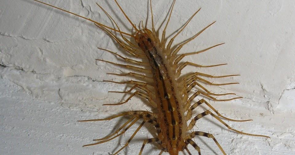 Insieme all'inverno arrivano anche gli insetti a casa? Liberatene con Yougenio