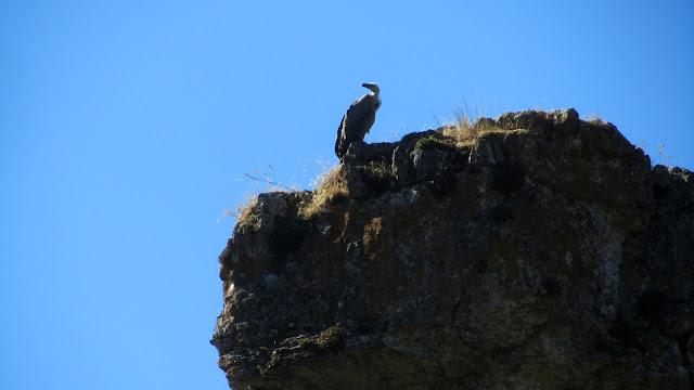 MTB a la Laguna Negra y Cañón del Río Lobos