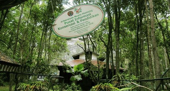Arboretum Nyaru Menteng salah satu 7 Taman Wisata Terbaik Di Indonesia Yang Bisa Anda Kunjungi Bersama Keluarga.