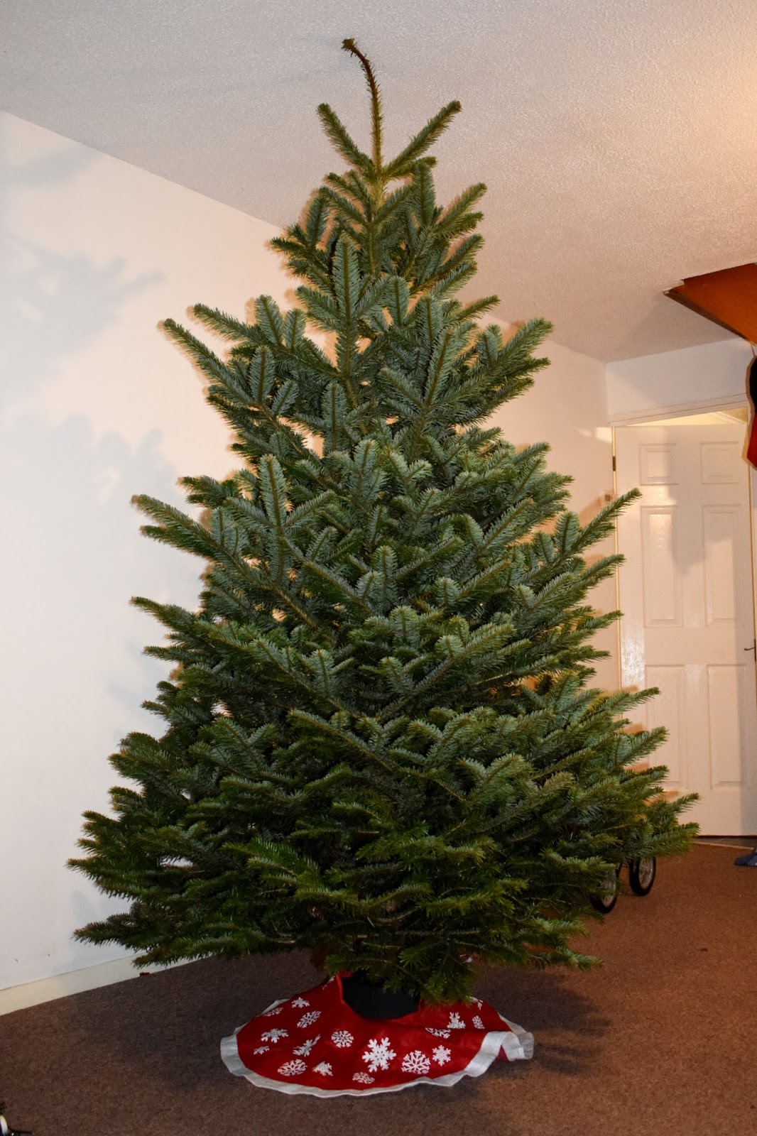 Tantrums To Smiles: A Beautiful Real Christmas Tree from ...