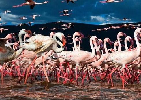 Keindahan Taman Binatang Di Dubai