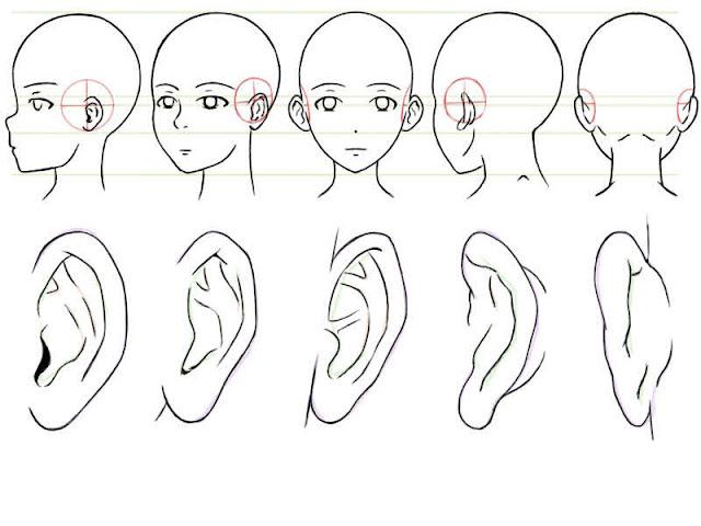 oreilles terminées et mises au propre