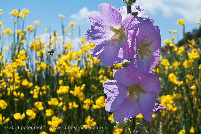 Samos Media Beautiful Spring On Samos