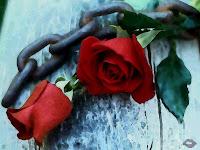 Garcilaso de la Vega: Amor y poesía, Ancile
