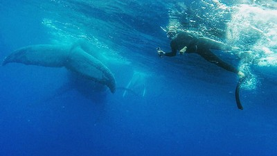This Lucky Guy Was Photobombed By A Massive Whale