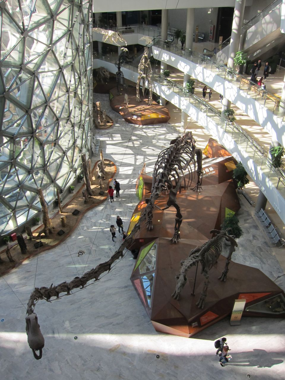 Shanghai Natural History Museum Tickets