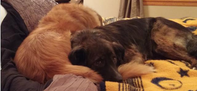 Beau (lighter colour) & Amber (darker colour)