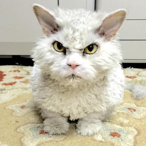 Kucing Berwajah Gangster Abang Kawasan Ini Miliki 93.7K Followers Di Instagram