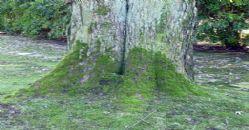 Taşlar ve Ağaçlardaki Yosunlar ile ilgili aramalar ağaçların yosunlu kısmının ters tarafı hangi yönü gösterir ağaçların ve kayaların nokta nokta bakan yüzleri yosun tutar taşların yosun tutmuş yeri hangi yönü gösterir ağacın yosunlu tarafı ağaçların yosunlu kısmının ters tarafı nereyi gösterir ağaç ve taşların yosunlu tarafı hangi yönü gösterir e ödev karıncaların yuvalarının toprak yığılı kısmı hangi yönü gösterir yosunlar ile yön bulma